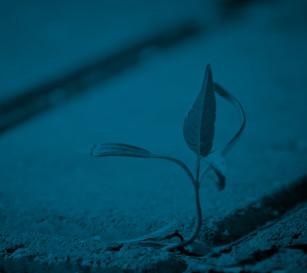 preservia småbilder-blomma